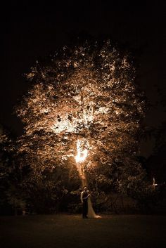 Let There Be Light! Wedding lighting inspiration. Light up the trees! :)