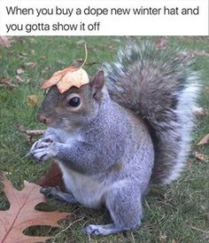 Laugh Out Loud With These Funny Squirrel Memes - World's largest collection of cat memes and other animals Squirrel Pictures, Funny Animal Pictures, Cute Pictures, Random Pictures, Dog Pictures, Squirrel Memes, Cute Squirrel, Squirrels, Flying Squirrel