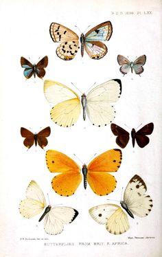 animal butterflies site:vintageprintable.com - Google Search