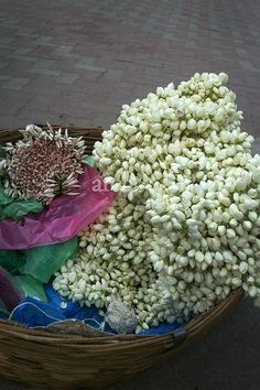 "jasmine flower hair | Jasmine Flowers being sold in Madurai India for the hair ""Plants ..."