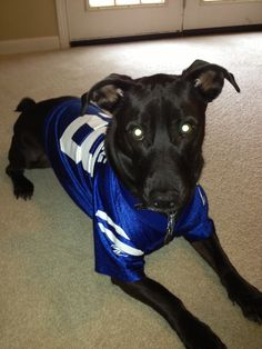 This Dog Is Cheering For The Colts Notice His Name Is Peyton