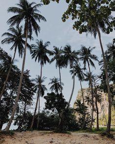 Into the wild  #thailand #wild #mood #sea #beach #landscape #krabi #intothewild #onthetoad #backpack #backpackers #travel #trip #travel #thailand #adventure #viaggio #thailandia #avventura #natura #selvaggia #travelblogger #nomadedigitale #digitalnomad #savage #viaggio #photography #nature #naturephotography Thailand Adventure, Thailand Travel, Beach Landscape, Krabi, Travel Trip, Digital Nomad, Savage, Nature Photography, Backpack