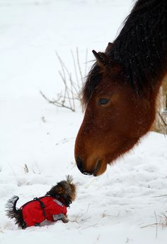 Tiny puppy, fluffy pony!