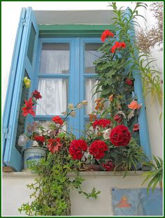 love lots of flowers on the window sill