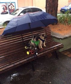 Their Owner is Somewhere Getting Soaked in the Name of Love OMG. Drenched in adorableness!