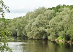 Lush foliage covers both banks of the Emajogi River that bisects Tartu, Estonia's university city.