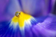 On the yellow mountain Macro Photography, Cool Watches, Poster, Yellow, Mountain, Nature, Amazing, Naturaleza, Nature Illustration