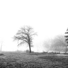 Alone with my thoughts. . . . . . . . #blackandwhite #blackandwhitephotography #bnw_of_our_world #bnwtime #bnw #bnwphotography #trees #bnwmood #blackandwhiteisworththefight #blackandwhiteonly #fog #park #chicago #illinois #suburblife #instagoods #instapics #instagood #instagram #bnw_life #photooftheday #bnwoftheday #monochrome #monochromatic