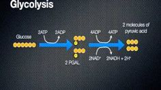 cellular respiration - energy in a cell