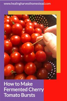 The end of harvest season is here! Do you have too many cherry tomatoes left? Well, you can make these easy and healthy fermented cherry tomato bursts! These are so delicious, and they literally burst in your mouth! They make the perfect snack or garnish for kids and adults. You'll love this easy recipe for fermented tomatoes! #healingharvesthomestead #cherrytomato #fermented #recipe #easy #healthy Tomato Vine, Fermentation Recipes, Yummy Healthy Snacks, Harvest Season, Eating Raw, Fermented Foods, Healthy Options, Cherry Tomatoes