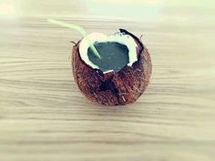 Smoothie in a coconut! :) #smoothie #smoothies #greensmoothies #coconut