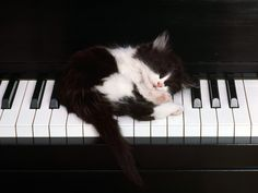 Music is so powerful and influential. Did you know that it also influences animals? Read on the blog today about the influence of music on animals and how it helps them grow and develop!  Do you have animals that you play music for?