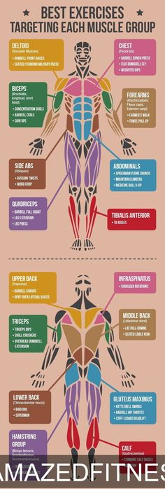 *CLICK FOR ALL EXERCISES* Best Exercises Targeting Each Muscle Group…