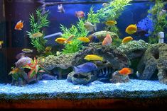 Online store of carpet aquarium plants