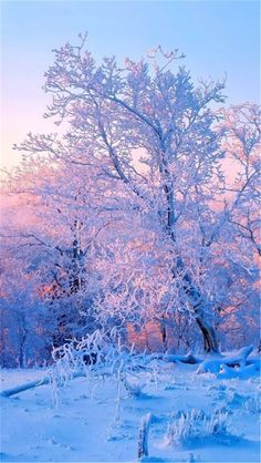 60 High Quality And Breath-Taking Christmas Winter Wallpaper For Your Phone - Page 48 of Winter Photography, Landscape Photography, Nature Photography, Winter Pictures, Nature Pictures, Nature Wallpaper, Wallpaper Backgrounds, Tree Wallpaper, Laptop Wallpaper