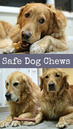 Are you aware of the dangers of rawhide dog chews? Try Bully Sticks for a safe and natural alternative!