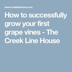 How to successfully grow your first grape vines - The Creek Line House
