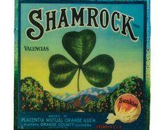 Shamrock - Vintage Citrus Crate Label - Handmade Recycled Tile Coaster