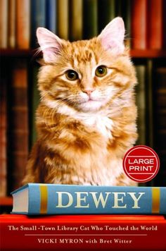 This is Dewey, who lived in a public library all of his life.
