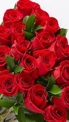 Red roses guide, Select the correct soil to acquire the ideal outcome. You may also make an artificial plot with just one type of soil. Good Morning Beautiful Flowers, Beautiful Flowers Wallpapers, Beautiful Rose Flowers, Beautiful Flower Arrangements, Amazing Flowers, Pretty Flowers, Red Flowers, Yellow Roses, Rose Flower Wallpaper