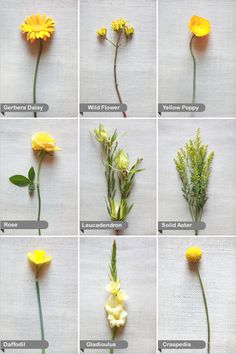 It is time for another installment of our Wedding Flower Guide. Today we have some sunny vibrant yellow wedding flowers to share with you. Everybody loves a yellow wedding. In fact our Crafty Teal and Yellow Wedding is still one of our most popular . Bunch Of Flowers, Types Of Flowers, Wild Flowers, Daisy Flower Types, Meadow Flowers, Little Flowers, Small Flowers, Wedding Flower Guide, Yellow Wedding Flowers