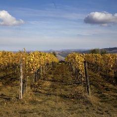 Il meglio di Montalcino - Benvenuto Brunello: quindici etichette da appuntarsi. Riserve, Rossi e Moscadelli inclusi