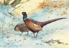 pheasant in the snow christmas card - Google Search