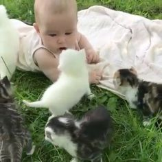 It contains extreme sweetness😍😍😘❤️Double tab ❤️ Follow us @animals.clup 🐾🦁 . . . . #cats #cat #catsofworld #catsofig #catsofinstagram #catsofinstagrams #catofinstagram #catsofinsta #kitty #catstagram #catselfie #catsofworld #catlovers #gym #kitten #catslover #catsdaily #cats_of_Instagram #catsagram #catmom #catsrule #cats_of_world #coffeelover #kitten #coffee #bestmeow #cats_of_inst #cat_features #thedailykitten #excellent_cats #meow