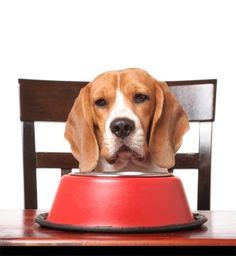 http://dogs.lovetoknow.com/wiki/Majestic_Raw_Dog_Food