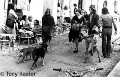 Bars, people and dogs. Port of Ibiza. 1974.
