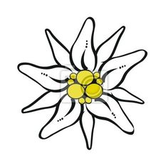Coloriage Fleur Edelweiss.24 Best Edelweiss Images Dressmaking Embroidery Needlepoint
