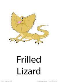 Frilled lizard flashcard