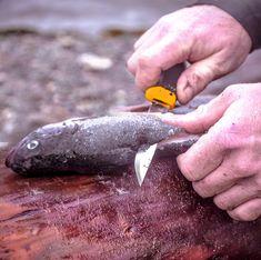 Die 70+ besten Bilder zu Angeln, Fischen   angeln