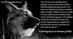 grazmiko – Google+ Signs, Movie Posters, Animals, Google, Lilies, Dog, Animales, Animaux, Shop Signs