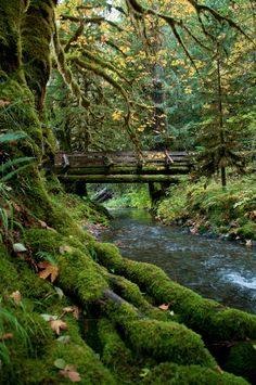 Olympic National Park Fall 2011 by Grant Gilmore, via Behance