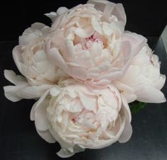This is a cube vase floral arrangement that features white peonies.  See our entire selection at www.starflor.com.  To purchase any of our floral selections, as gifts or décor, please call us at 800.520.8999 or visit our e-commerce portal at www.Starbrightnyc.com. This composition of flowers is generally available for same day delivery in New York City (NYC).  SQ167