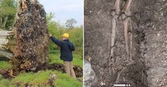 Archaeologists were stunned when the thousand-year-old skeleton of a young man was found among the roots of a tree ripped from the ground.  Storms in September blew over a 215-year old beech tree outside Collooney, Sligo, Ireland, unearthing a human skeleton.