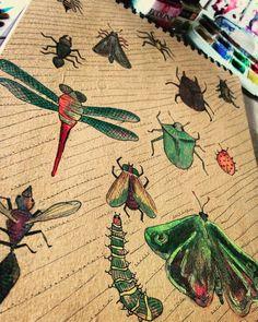 bugs, watercolor, illustration, bee, ladybug, craft, draw, art