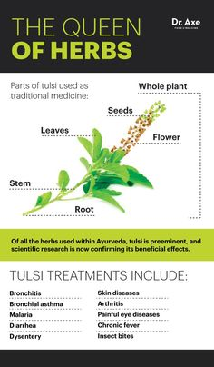 10 Benefits of Tulsi — Combats Cancer & Infections - Dr. Axe