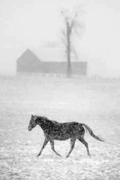 "This picture is simply beautiful.  You see a horse standing in the snow, and you get a glimpse of a barn in the background.  The ""horse capital of the world"" is simply displaying its beauty in this picture."