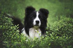 Muffin by mzurawinska #animals #animal #pet #pets #animales #animallovers #photooftheday #amazing #picoftheday