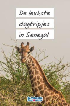 Op zoek naar het authentieke Afrika? Ruil Kaapverdië, Egypte of Gambia eens in voor een ander Afrikaans land en spreid jouw vleugels uit in Senegal. Deze fijne zonbestemming geeft je de mogelijkheid om tijdens dagtripjes en excursies kennis te maken met de lokale cultuur. Of natuur.