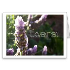 Customise Product LAVENDER