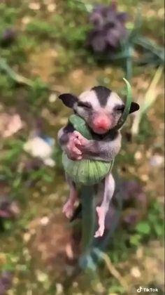 Dumb Animals, Cute Wild Animals, Cute Little Animals, Cute Funny Animals, Animals And Pets, Nature Animals, Amor Animal, Mundo Animal, Cute Animal Photos