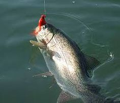 """""""Anche i pesci provano dolore.  Le trote possiedono recettori polimodali proprio come gli uomini"""""""