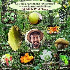 List of Wild Edible Plants