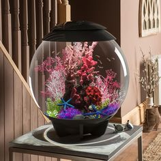 Pin by stacey on decoration ideas for new tank pinterest for Decoration aquarium 60 litres