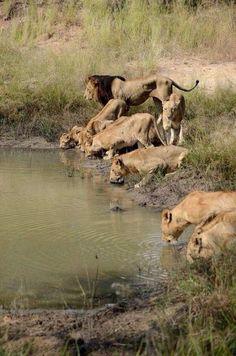 7 Best namibia trip images | Land of the brave, Namib desert