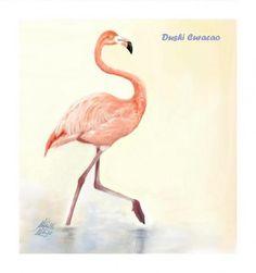 Flamingo - Dushi Curacao