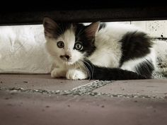 I Can Has Cheezburger? - Cats - Page 5 - Lolcats n Funny Pictures - funny pictures - Cheezburger